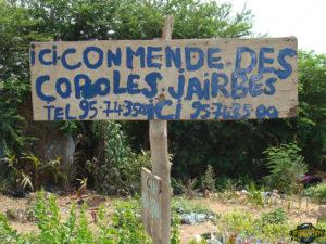one-original-travel-guide-commerce-benin-afrique-fleuriste-conmende-coroles-jairbes